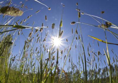 Kesä ja kärpäset